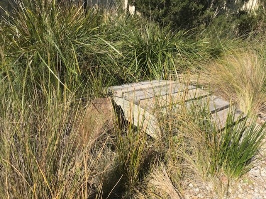 Athol Primary School Wetland Project